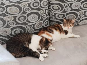 Biscotte & Mischka