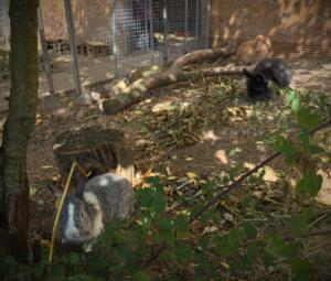 Parcs lapins
