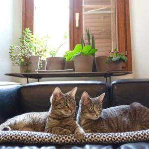 Nia & Miette